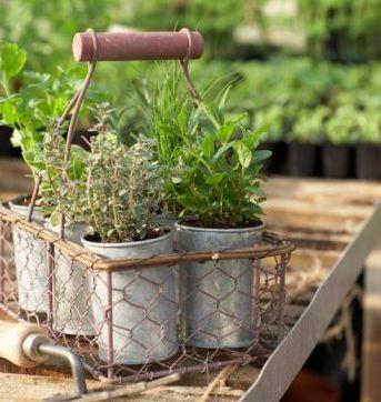 Terrazas busca y decora busca y decora - Plantas aromaticas exterior ...